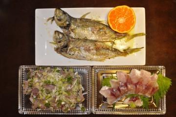 今日の晩ご飯はアジのオリーブオイル焼きにアジ酢とタタキ