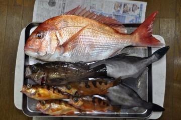 多彩な魚種に感謝!!