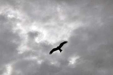 落ちてきそうな雲と円を描いて飛ぶトンビ