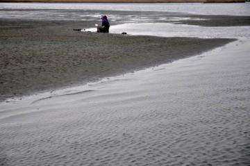 潮がドンドン満ちてきますがガンバってシジミを夢中で捕ってます
