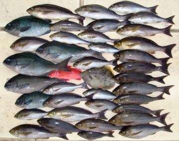 今日の釣果・・・赤いのは彩りに