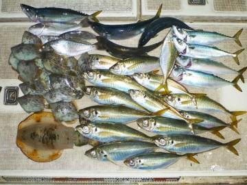 今日は魚種も豊富・・カワハギ、アオリイカ、アジ、イシモチ、サバ