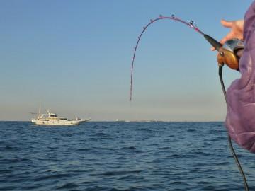 竿を曲げているのはアジ・・・観音沖沖で