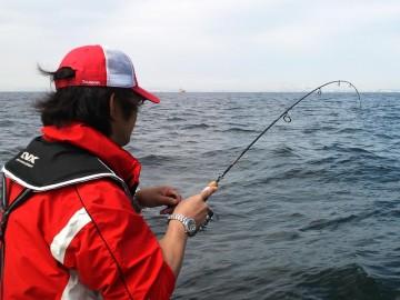 釣れたメゴチをエサに何かが・・・あがってきたのは1mを超すサメでした