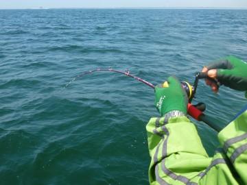 大型は水面に竿を持ってかれます