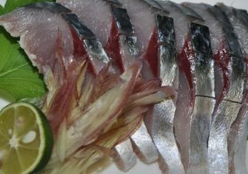 釣りたてのしめ鯖最高に脂が乗って美味しいです