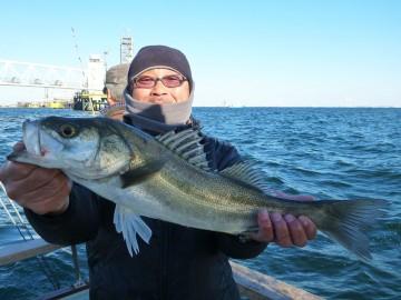 50cmちょい・・・マジさんが最初に釣り上げました