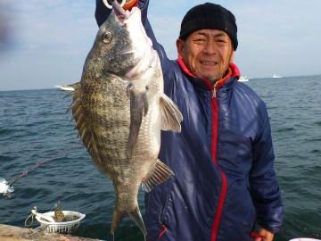 お腹パンパンの3kgの黒鯛が船長に・・・この時期釣れます