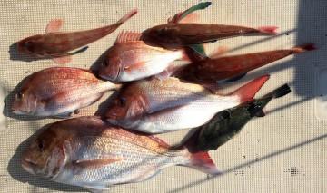 美味しい魚が釣れました!