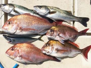 今日の釣果です