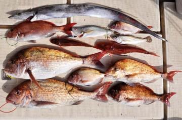 美味しい魚がいっぱい・・・!