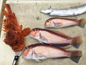 マダイは不発・・・・高級魚のオンパレード!