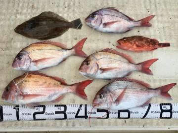 1.17kg1.05kgとキロ未満3枚・・カレイにカサゴ