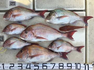 今日の釣果・・・7枚+ホーボー