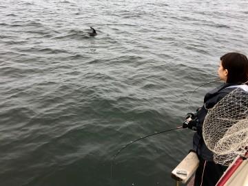 イルカに2時間ストーカーされました
