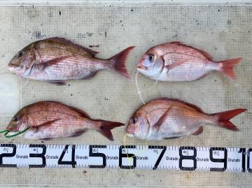 小型が多かったが、釣れたら最高・・・!