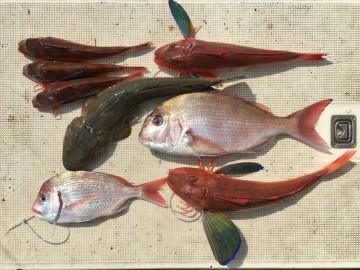魚種が豊富でした・・・!