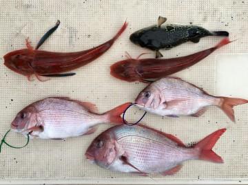 今日の釣果です・・・!