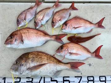 釣果です・・・!塩焼きサイズが上げ・・型物が下げ でした