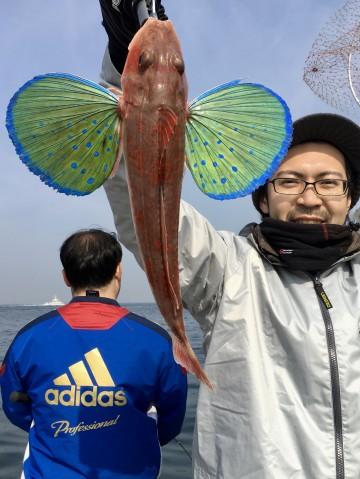 大きな羽を広げた綺麗なホーボー・・島崎さん