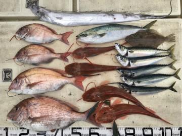 色々釣れた今日の釣果です・・・!