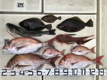 今日の釣果・・・高級魚が・・・!