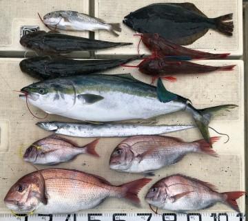 7魚種が釣れました・・・!