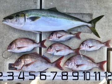 釣果です・・・