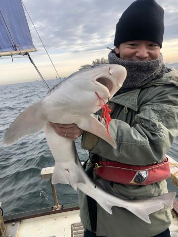 でかいサメだったよ!