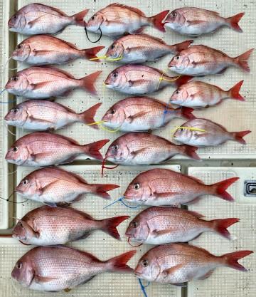 釣果です・・・! 1.61kg1.16kg1.01kg1kgから塩焼きまで20枚でした